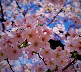 Обои на телефон весна, любовь, love