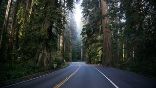 Обои на телефон природа, темные, ночь, дорога, лес, туман, дождь, хайвей, дороги