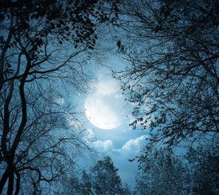 Обои на телефон силуэт, природа, пейзаж, ночь, луна, деревья