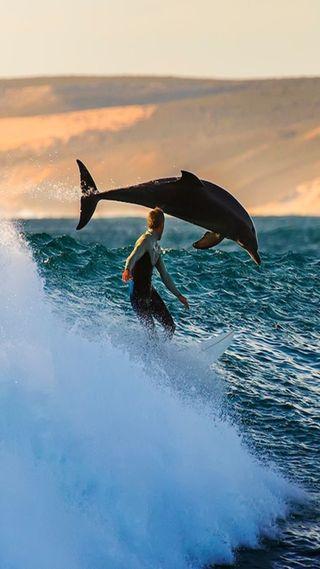 Обои на телефон море, дельфины, sea and dolphin, and dolphin