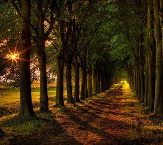 Обои на телефон солнце, путь, приятные, природа, пейзаж, новый, лес, естественные, дерево, грязь, natural landscape, dirt