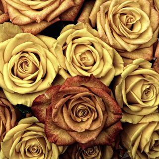 Обои на телефон валентинка, сердце, розы, любовь, love