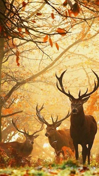 Обои на телефон фотографии, осень, на улице, fall wallpapers