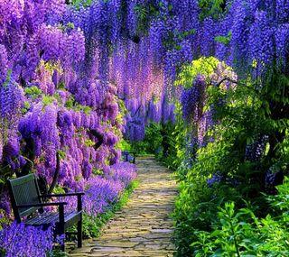Обои на телефон расцветает, парк, природа