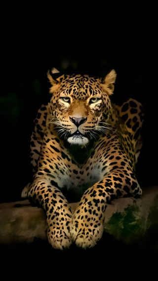 Обои на телефон леопард, черные