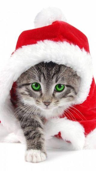 Обои на телефон счастливые, счастливое, рождество, новый, котята, merry kitty