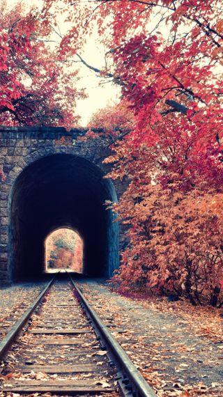 Обои на телефон пути, поезда, осень, деревья, train tracks
