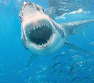 Обои на телефон акула, море