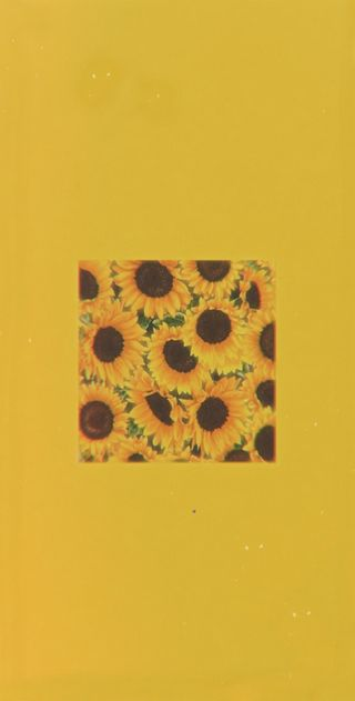 Обои на телефон подсолнухи, эстетические, простые, желтые, aesthetic sunflowers, aestethic