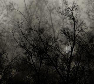 Обои на телефон лес, черные, темные