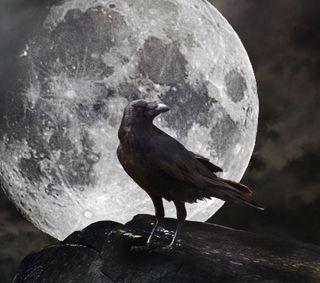 Обои на телефон ночь, луна, ворона, ворон, full moon crow
