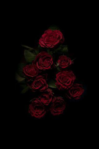 Обои на телефон розы, красые, черные, любовь, букет, love