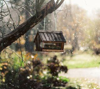 Обои на телефон холод, снег, птицы, зима, дом, дерево, ветка