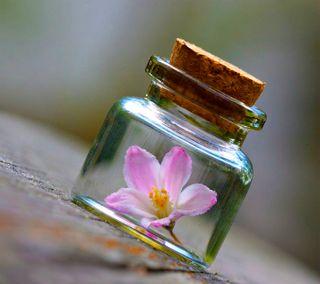 Обои на телефон бутылка, цветы, flower in bottle