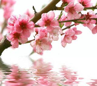 Обои на телефон розовые, весна, цвести