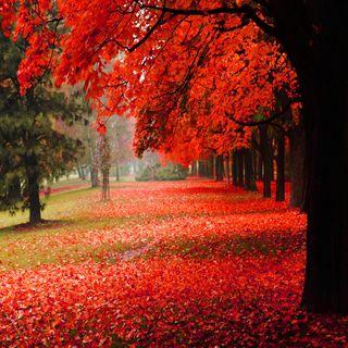 Обои на телефон парк, приятные, прекрасные, осень, милые, красые, взгляд, park autumn red