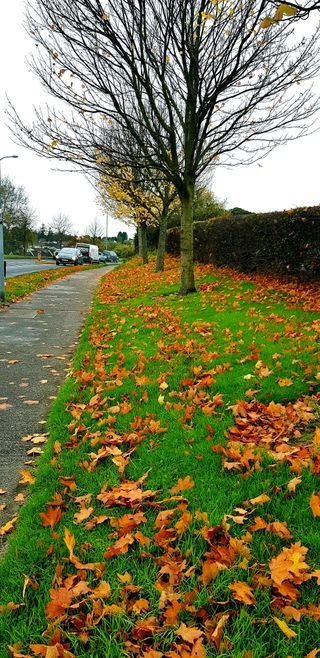 Обои на телефон ирландия, улица, природа, осень, европа, дорога, maple, jaikanth, hd, 4k