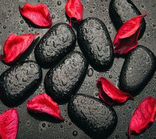 Обои на телефон лепестки, черные, розы, красые, капли, камни