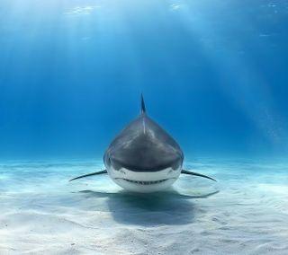Обои на телефон акула, синие, забавные