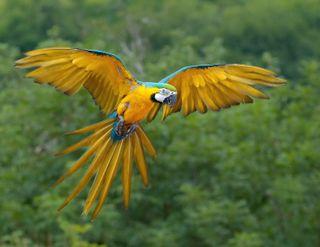 Обои на телефон попугай, тропические, летать, животные