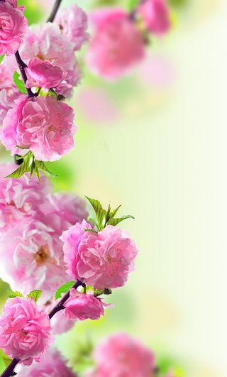 Обои на телефон цвести, весна, цветы, розовые, природа, hd