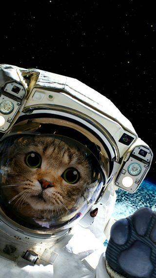 Обои на телефон привет, логотипы, кот, космос, космонавт, hello humans, gato astronaut space