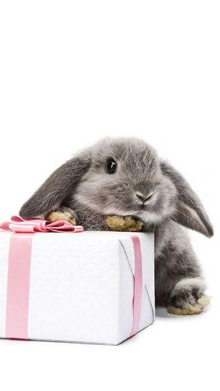 Обои на телефон пасхальные, розовые, подарок, кролик, белые