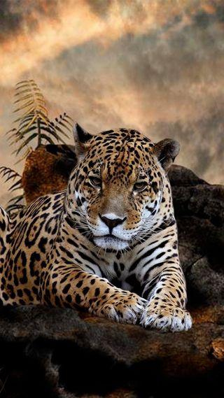 Обои на телефон небо, леопард, кошки, животные, дикие, big