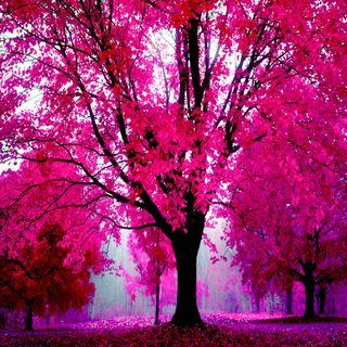 Обои на телефон взгляд, розовые, приятные, природа, прекрасные, милые, nature in pink