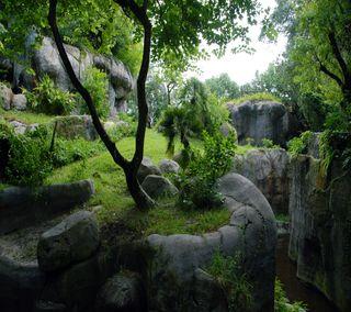 Обои на телефон джунгли, рок, растения, лес, камни, дерево