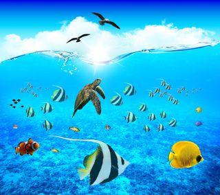 Обои на телефон черепаха, солнце, рыби, рыба, птицы, подводные, море, жизнь, волны, волна, sea life hd
