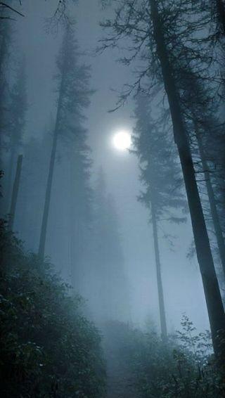 Обои на телефон ужасные, хэллоуин, туманные, туман, страшные, ночь, небо, луна, деревья, дерево