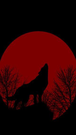 Обои на телефон эффект, природа, животные, волк, woeld, ulkucu