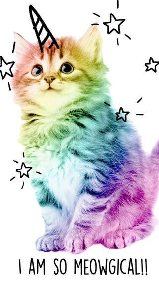 Обои на телефон цветные, магия, красочные, кошки, котята, звезды, единорог