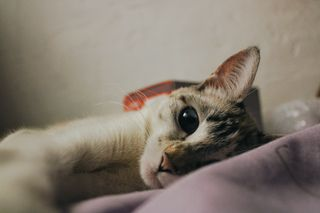 Обои на телефон коты, бумажный, papel de parede, lua, juliana brito, gatos, fofo, filhotes, felinos, bonito, animais
