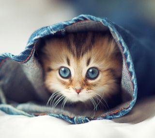 Обои на телефон whiskers, синие, новый, милые, приятные, животные, кошки, глаза, котята