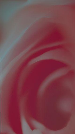 Обои на телефон макро, цветы, фотография, фото, розы, розовые, лепестки, closeup