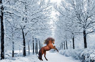 Обои на телефон холод, снег, рождество, прекрасные, лошадь, зима, деревья, дерево, декабрь, благодарение, horse in winter
