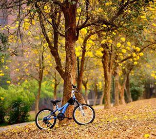 Обои на телефон осень, листья, велосипед, байк, bicycle leaves