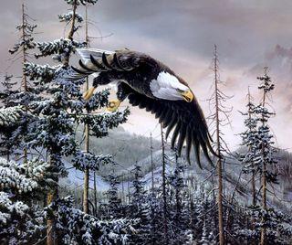 Обои на телефон птицы, снег, орел, летать, лес, зима, джунгли