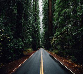 Обои на телефон природа, дорога, деревья