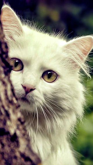 Обои на телефон взгляд, кошки, животные, белые, cat look