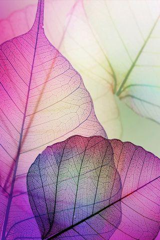 Обои на телефон листья, фиолетовые