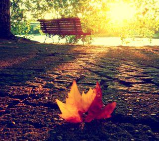 Обои на телефон естественные, солнце, прекрасные, осень