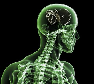 Обои на телефон шутка, череп, скелет, мозг, луч, зеленые, забавные, арт, x-ray, brain capacity, art, anatomy