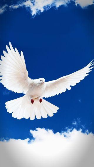 Обои на телефон летать, мир, белые, pigeon