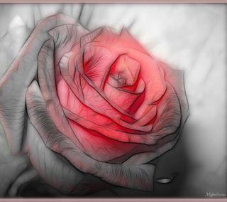 Обои на телефон мама, цветы, розы, любовь, красые, корея, rose is red, love