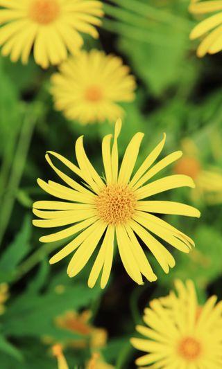 Обои на телефон сад, яркие, цветы, цветение, цвести, фото, счастливые, лето, зеленые, желтые, боке, summertime, hd, happy