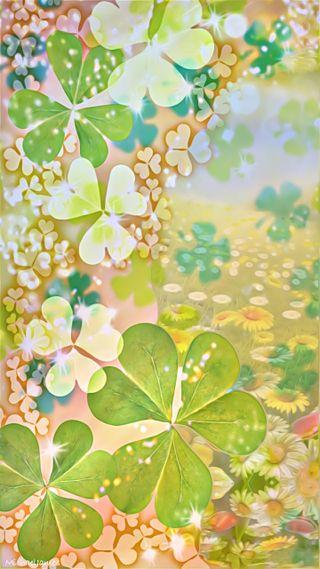 Обои на телефон маргаритка, цветы, ромашки, патрик, клевер, shamrocks daisies