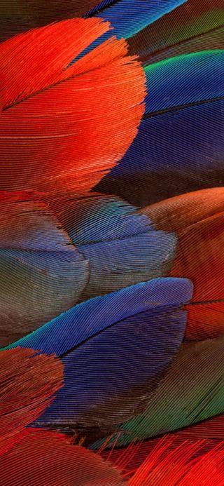 Обои на телефон попугай, хуавей, текстуры, порше, матовые, huawei mate porsche, huawei mate 20 rs porsche